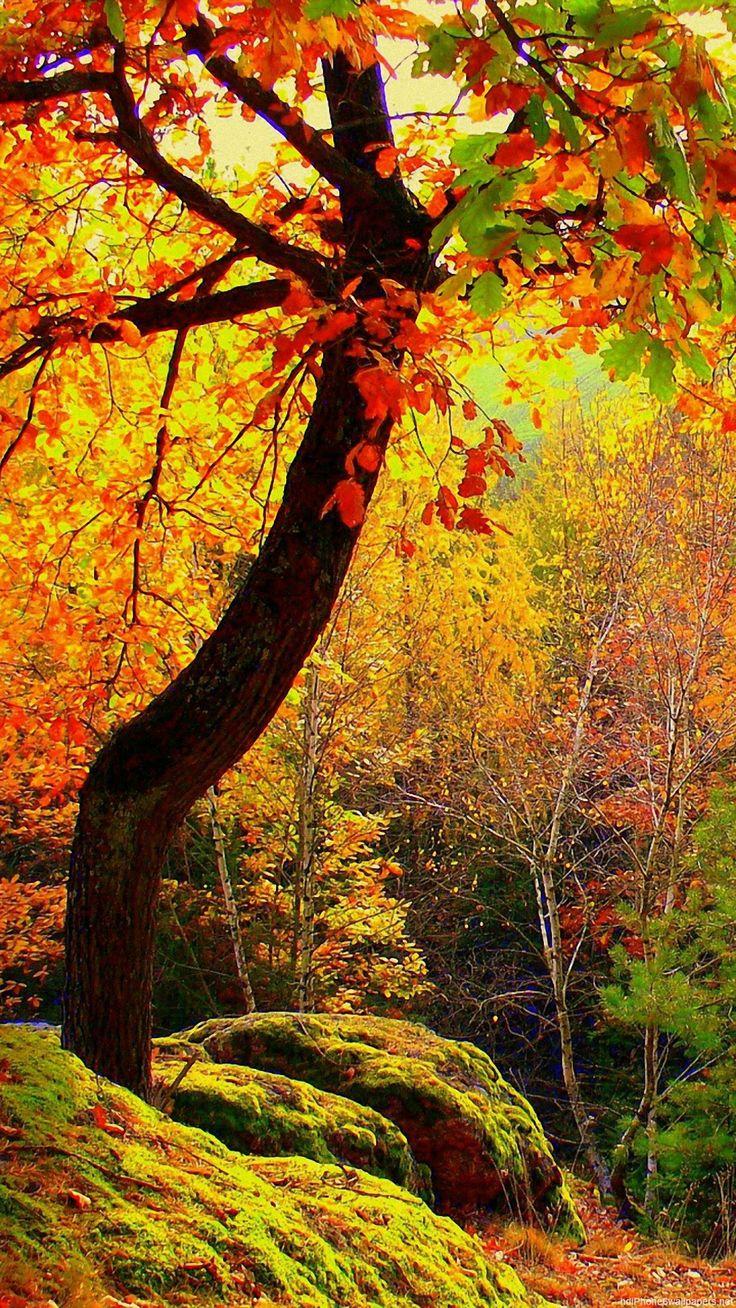 Pusheen Wallpaper Fall Best 25 Fall Wallpaper Ideas On Pinterest Autumn Iphone