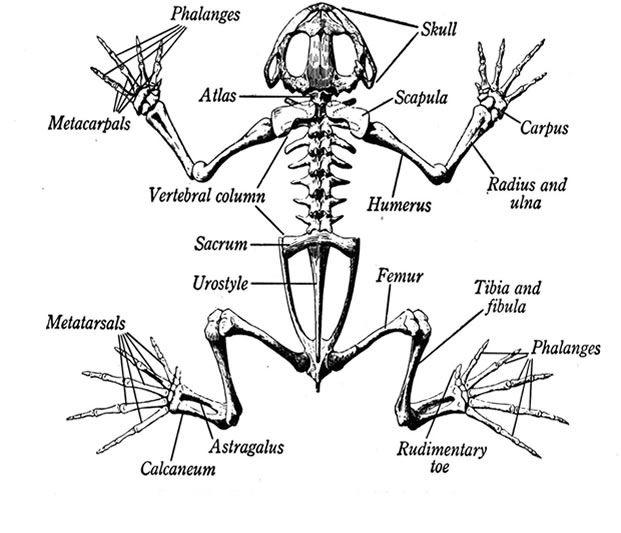 http://www.animalcorner.co.uk/animalgroups/graphics