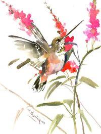 1000+ ideas about Watercolor Hummingbird on Pinterest ...