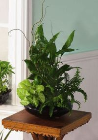 """House Plant Tropical Ask For Color 8"""" Ceramic pot Nice ..."""