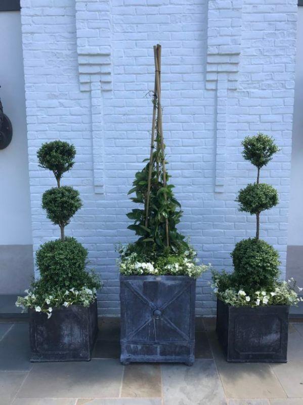 Best 20 Green mountain boxwood ideas on Pinterest Green