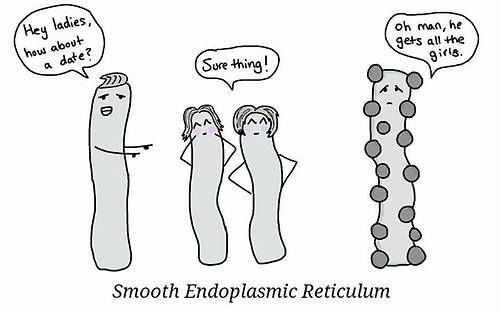 17 Best images about Science Joke of the Day Compilation
