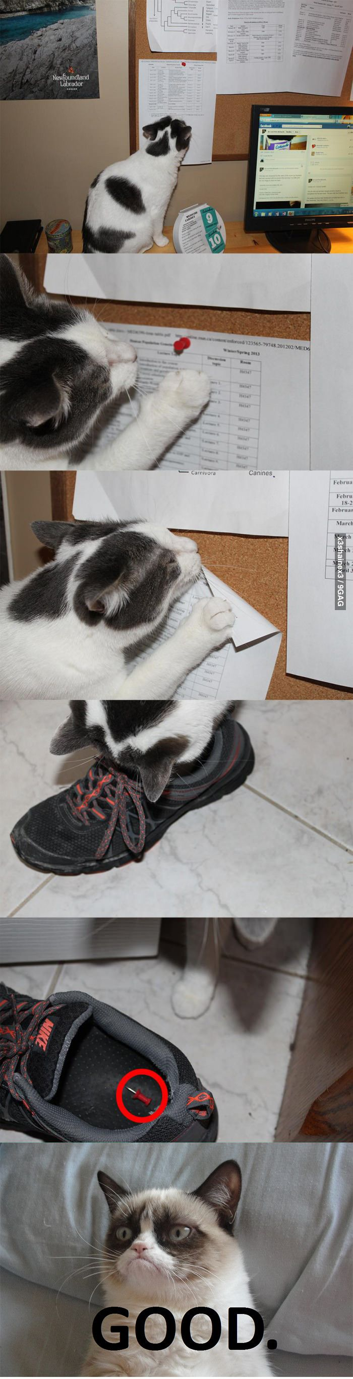 cats . only repinning is because i have the same nikes lol and i am sure rasc would do this