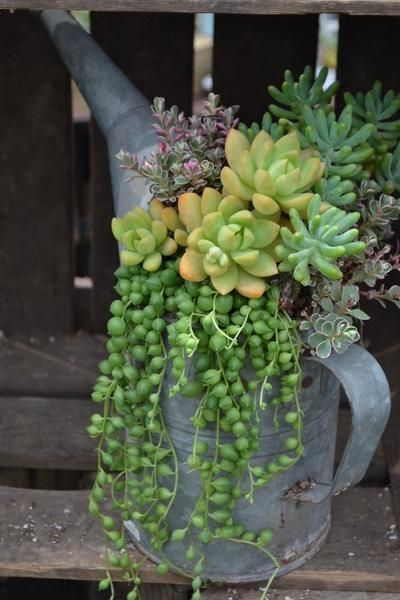 25 Best Ideas About Succulent Pots On Pinterest Linda Plant
