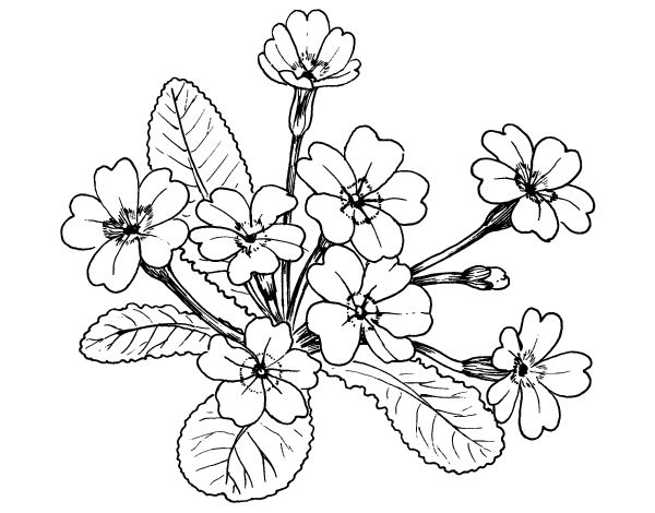 44 Best Images About Dibujos De Flores Para Colorear On