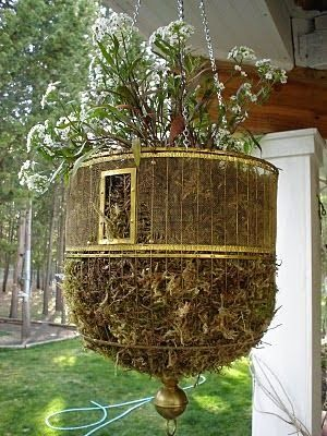 8077 Best Images About Small Budget Gardening On Pinterest Bird
