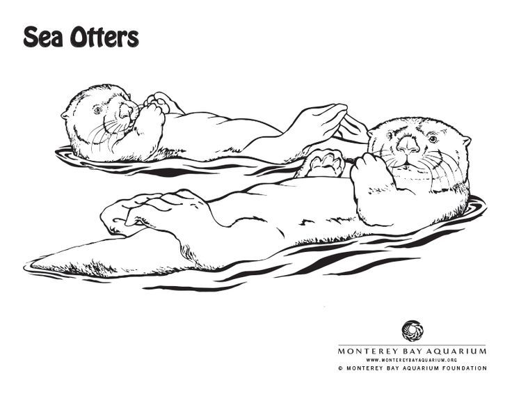 Baby Sea Otter Coloring Pages Sketch Coloring Page