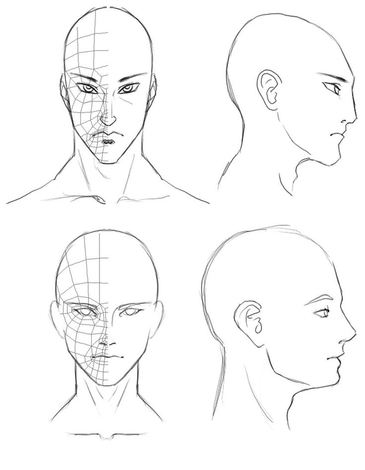 Orthographic Head Drawings by *Athey on deviantART