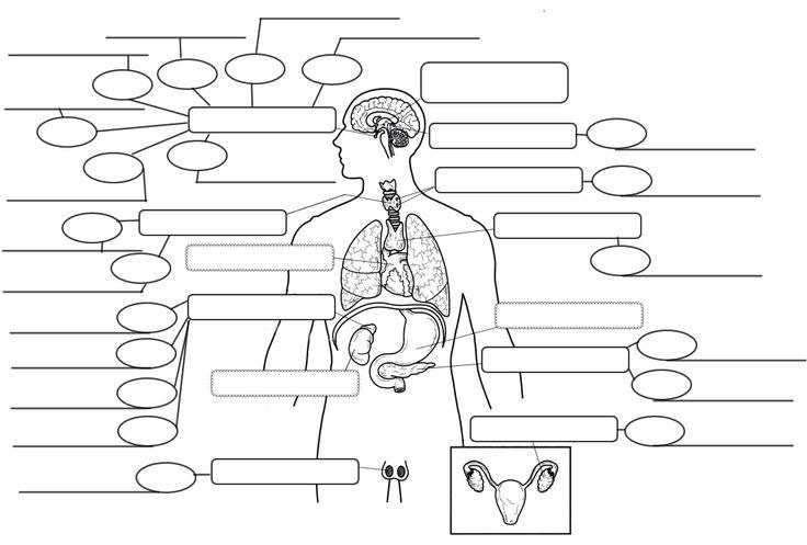 62 best images about Nursing (Endocrine System) on
