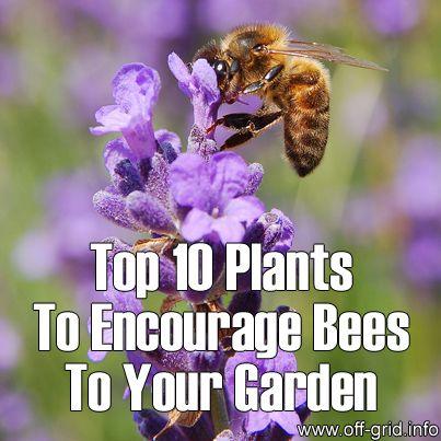 210 Best Oh Honey Honey Good Plants For Honeybees Images