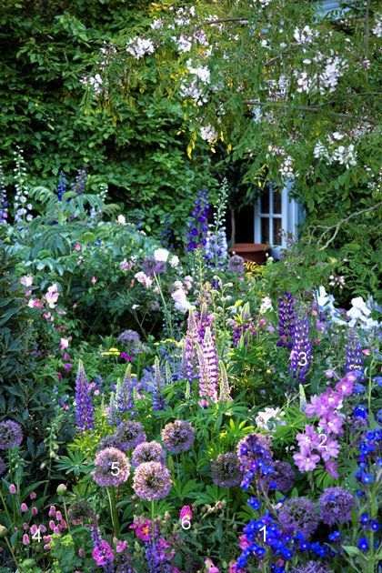 641 Best Images About Flower Borders & Cottage Gardens On