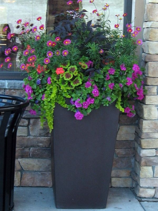 25 Best Ideas About Container Flowers On Pinterest Container