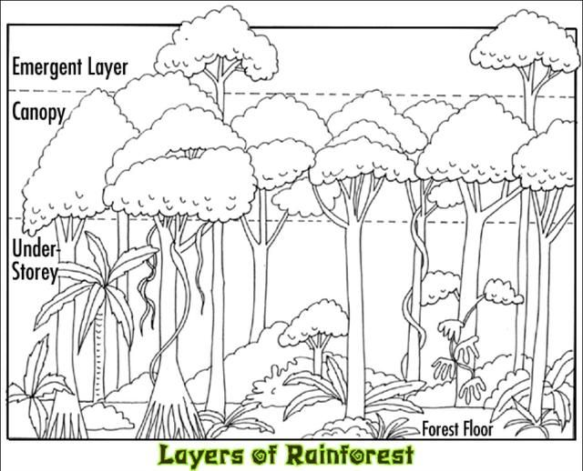 1000+ ideas about Animals In The Rainforest on Pinterest