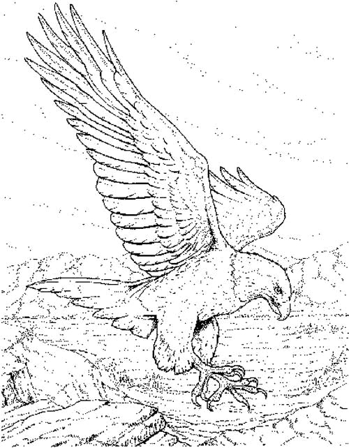 21 best images about Eagle Coloring Pages on Pinterest