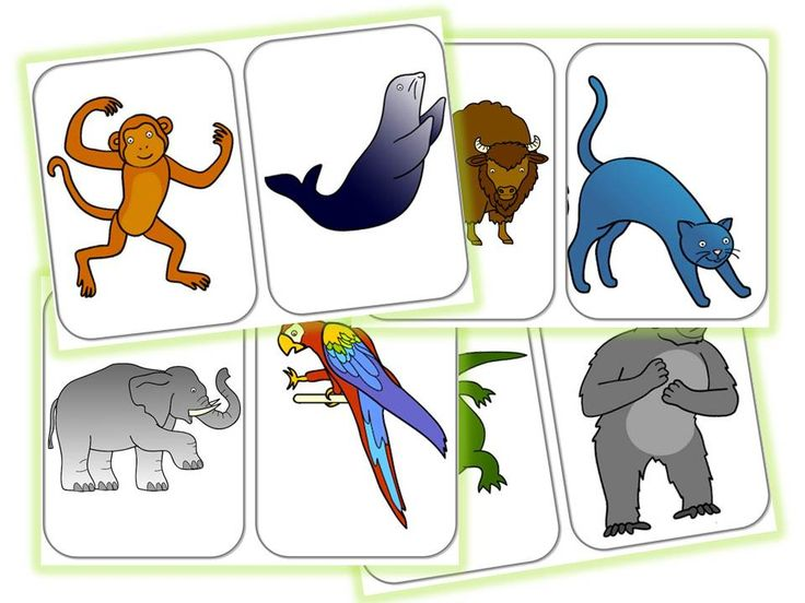 From head to toe flashcards  Story telling  Pinterest