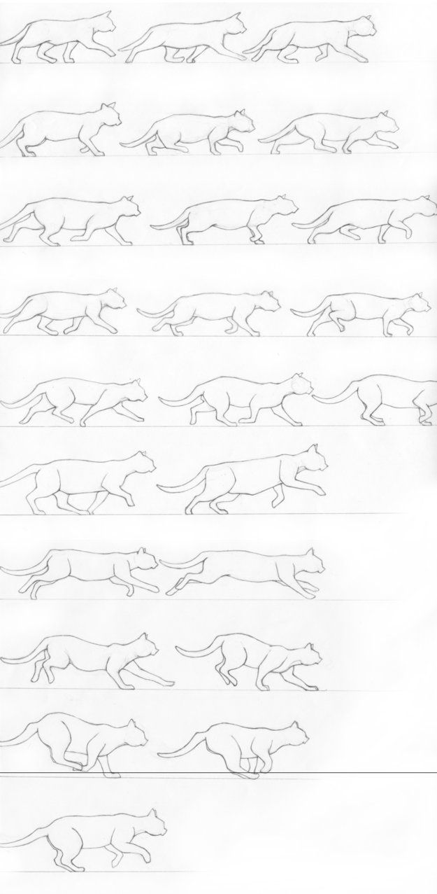 254 best images about Animal Anatomy & Tutorials on