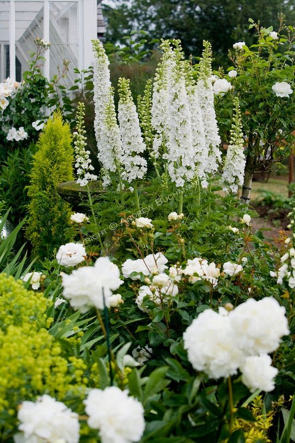 17 Best Images About The White Garden On Pinterest Gardens