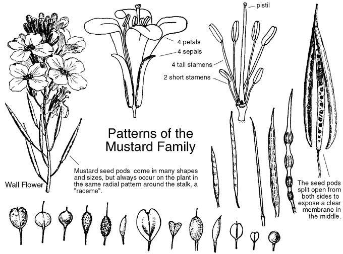 25+ Best Ideas about Plant Identification on Pinterest
