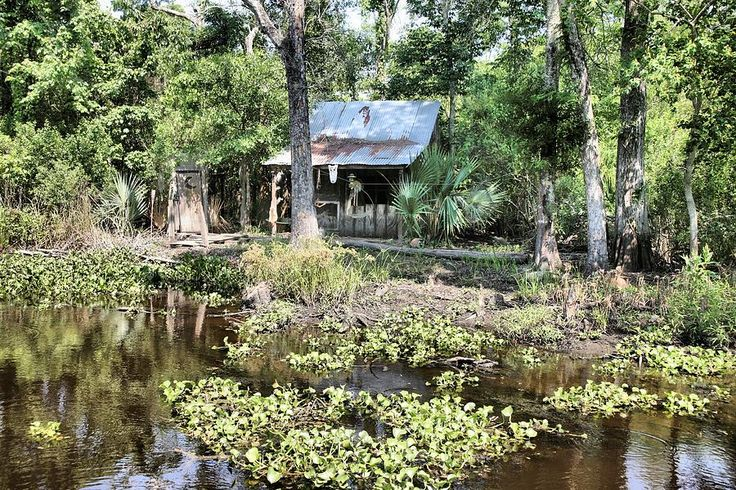 Louisiana Swamp Cabins  Cabin In Swamp Photograph by