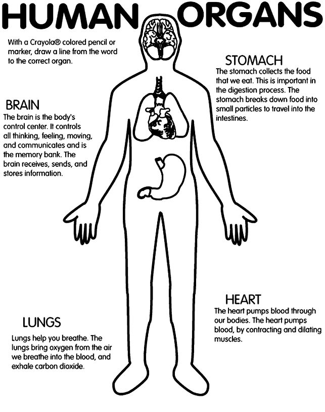 printable worksheet: Human organs (brain, stomach, lungs
