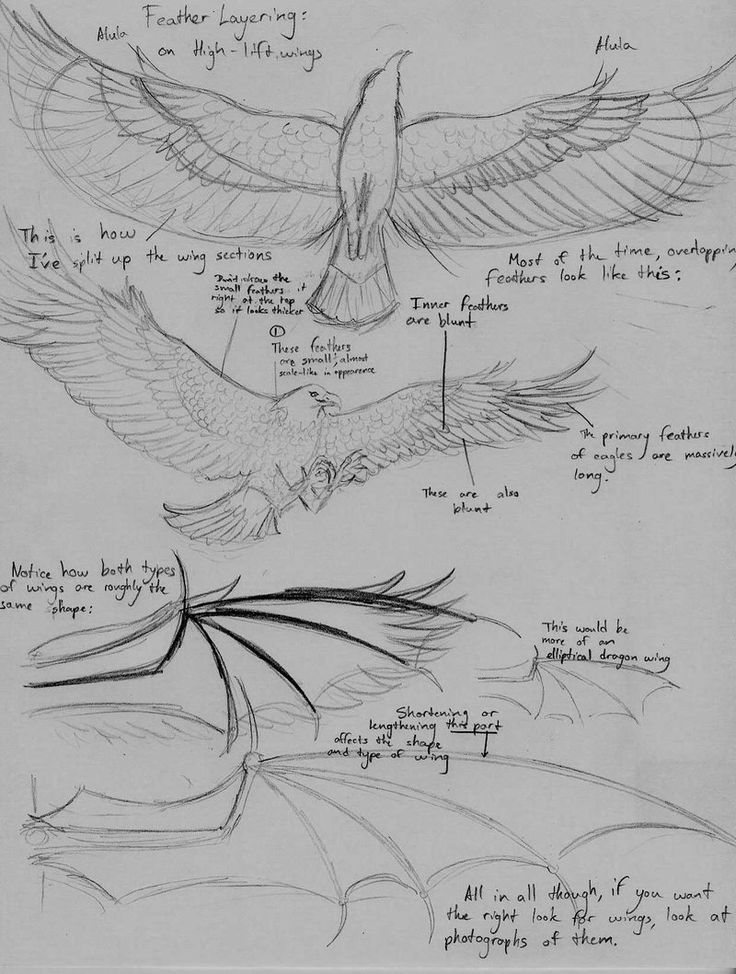 How to Draw Wings and Feathers by Theophilia Awesome guide