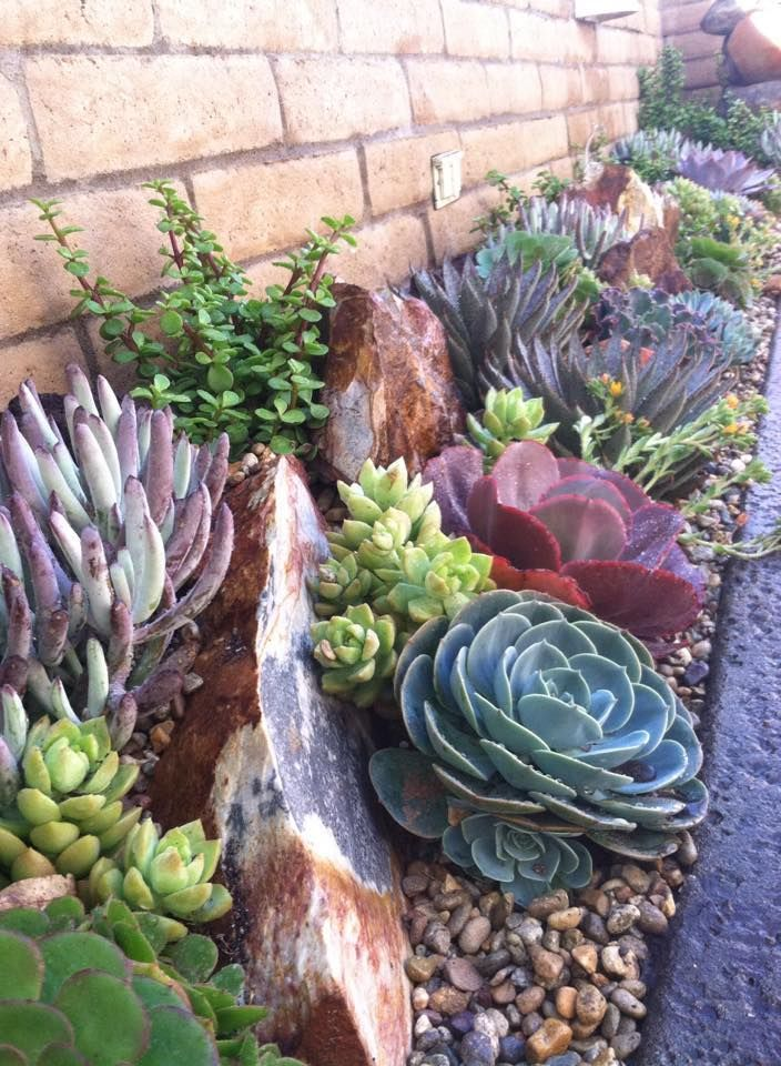 25 Best Ideas About Succulent Rock Garden On Pinterest Garden