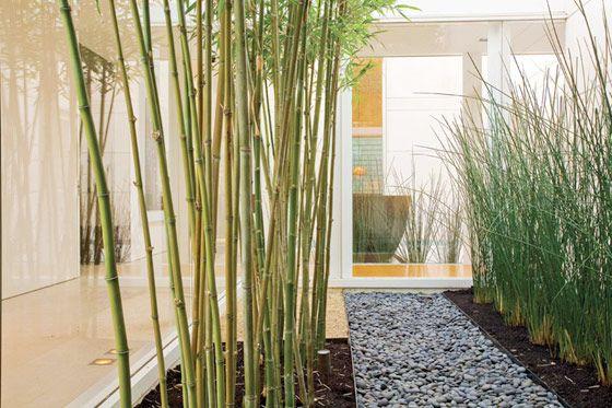 yard landscape ideas - horsetail