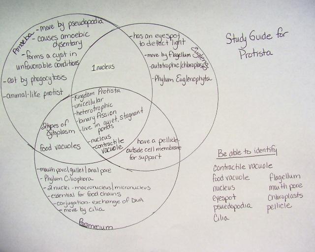 Protist Diagram Features