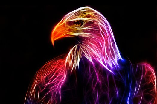 Cool things Fractals and Eagles on Pinterest