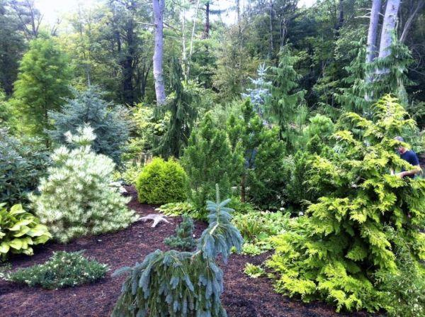 garden tours ma dwarf conifers