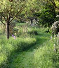 1000+ images about Garden on Pinterest | Shade garden ...