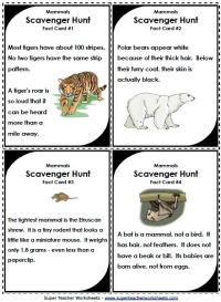 25+ best ideas about Animal classification worksheet on ...