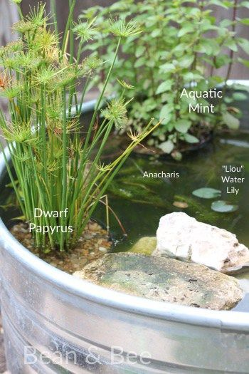 Best 25+ Mini pond ideas on Pinterest