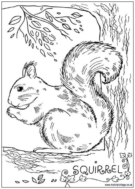 squirrel colouring page  i {heart} coloring pages