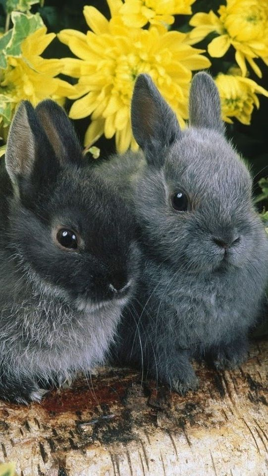 17 Best Images About Bunnies On Pinterest A Bunny Mini