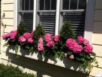 14 best images about WINDOW BOXES and CONTAINER GARDENS on ...