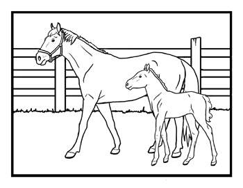 205 best Coloring-Horses images on Pinterest