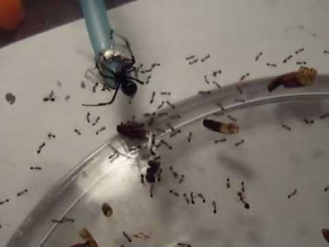 17 Best images about Get rid of house ants on Pinterest