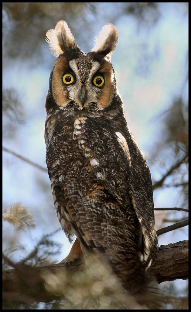 328 best images about Owl book on Pinterest  Feathers