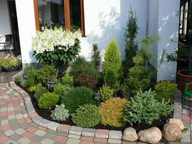 125 Best Images About Conifers On Pinterest Gardens Sun And Pine