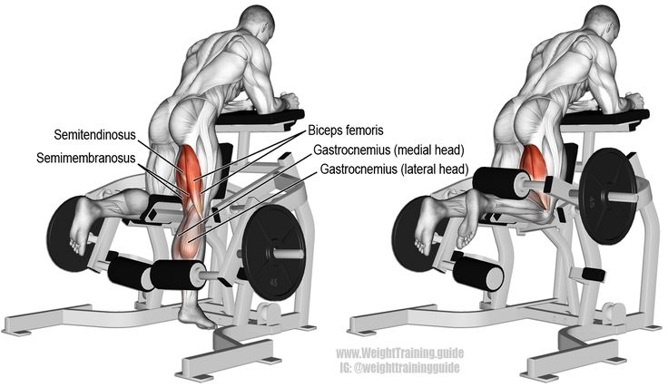 Kneeling leg curl An isolation pull exercise Main