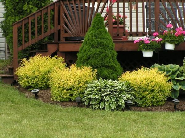 mixed evergreen border shrubs