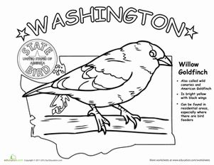 Willow Goldfinch Coloring Page Sketch Coloring Page