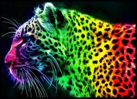 colorful rainbow tiger graphic design art picture ...