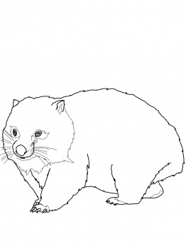 Coloring, Coloring pages and Wombat on Pinterest