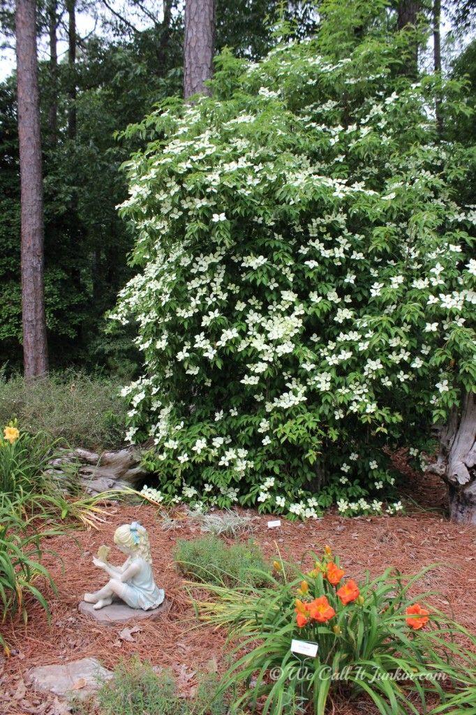 25 Best Ideas About Daylily Garden On Pinterest Sun Plants
