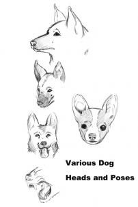 32 best images about Creature Design (dogs and puppies) on