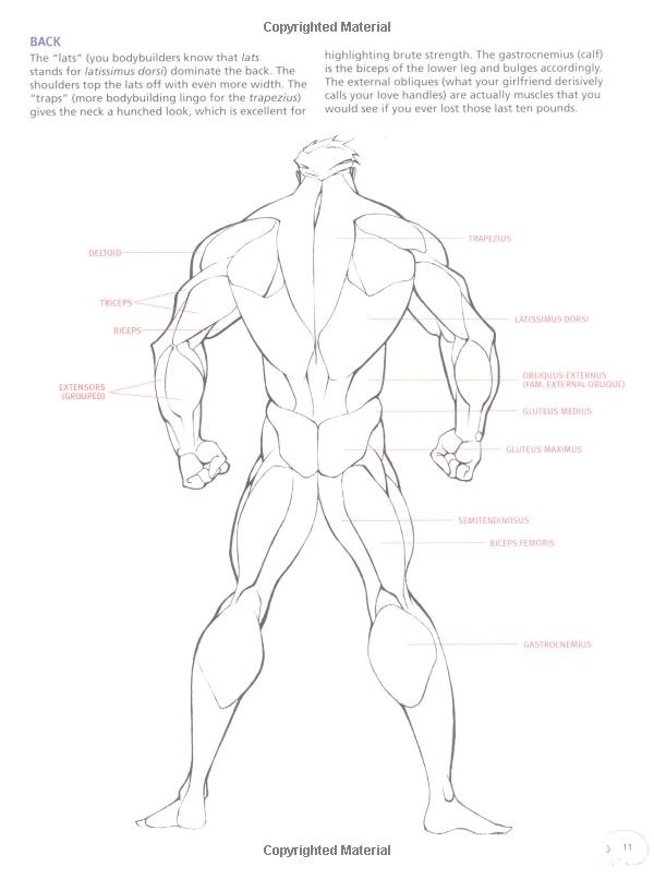 565 best images about Anatomy, Poses, & Gestures: on Pinterest