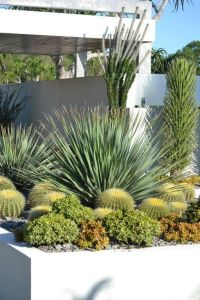 17 Best images about Desert garden planters and pots on ...