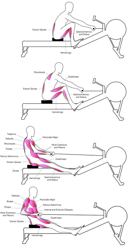 17 Best ideas about Rowing Machine Workouts on Pinterest